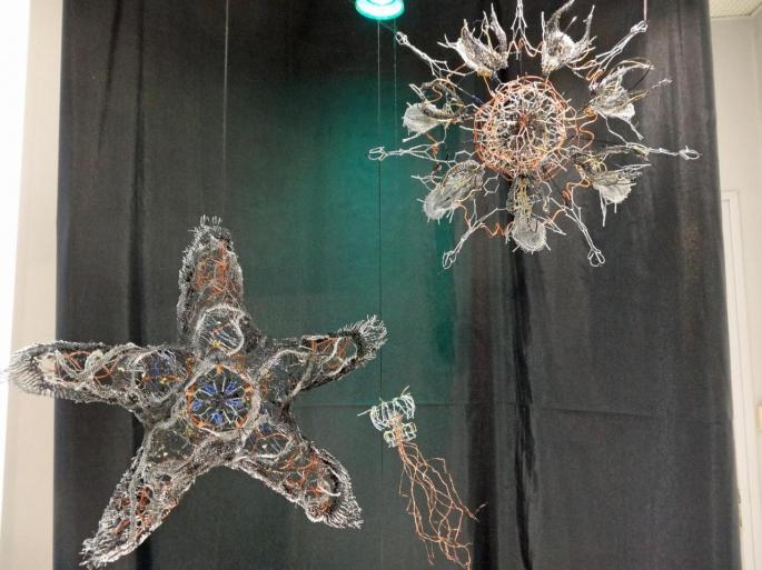 Etoile de mer, méduse et plancton de Tiana Guénant Ranarivelo